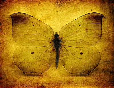 Digital Art - Vintage Grunge Butterfly by Steve Ball