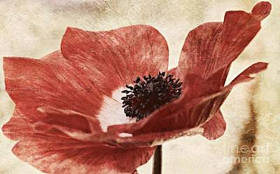 Anemone Photograph - Vintage Red by Clare Bevan