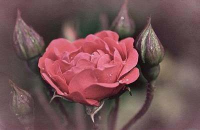 Vintage Rose No. 4 Art Print by Richard Cummings