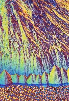 Vitamin Crystals Photograph - Vitamin B7 Crystals Light Micrograph by David Parker