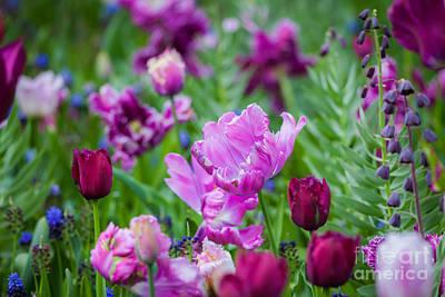 Photograph - Voiolet Meadow by Katka Pruskova