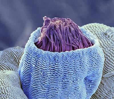 Vorticella Protozoan Art Print