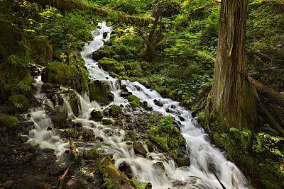 Wahkeena Creek Art Print by Mary Jo Allen