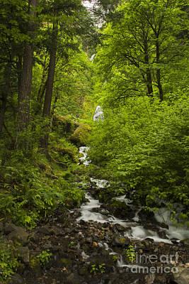 Photograph - Wahkeena Falls  by Sonya Lang