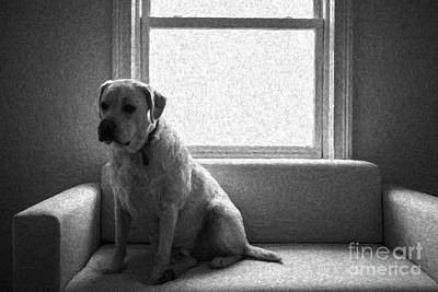 Labrador Retriever Photograph - Waiting by Diane Diederich