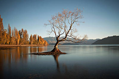 Photograph - Wanaka - That Tree 3 by Brad Grove