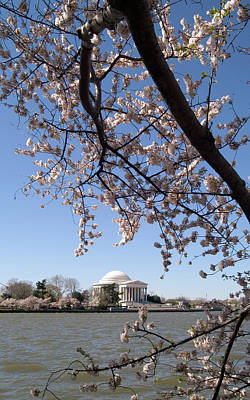 Washington, Dc, Cherry Blossom Festival Art Print