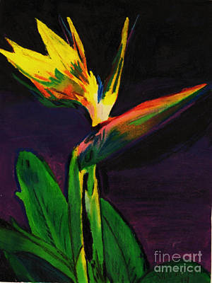 Caravaggio - Paradise bird Flower by Mary Wismer