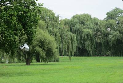 Photograph - Weeping Willows by Marian Jenkins