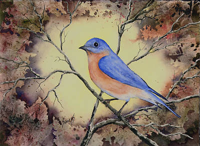 Painting - Western Bluebird by Sam Sidders