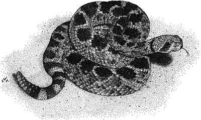 Photograph - Western Diamondback Rattlesnake by Roger Hall