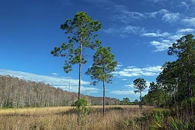 Florida - Usa Photograph - Wet Prairie Nature Reserve by Jim West