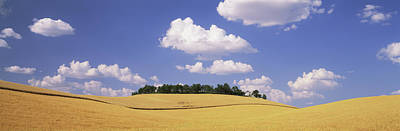 Simple Beauty In Colors Photograph - Wheat Crop In The Field, Washington by Panoramic Images
