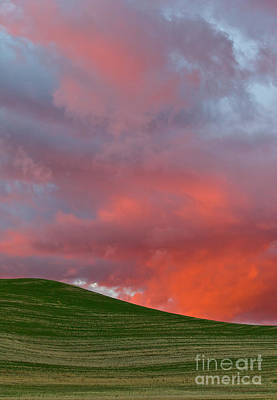 Photograph - Wheat Field At Sunset Palouse Hills by Yva Momatiuk and John Eastcott