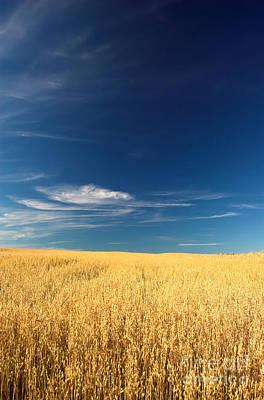 Bread Photograph - Wheat Field by Michal Bednarek