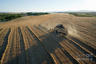 Wheat Harvest In Provence Art Print by Sami Sarkis