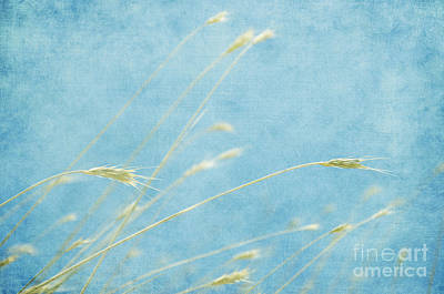 Photograph - Wheat In The Sky  by Jim And Emily Bush