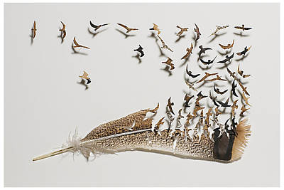 Shadowbox Mixed Media - Where Feathers Come From by Chris Maynard