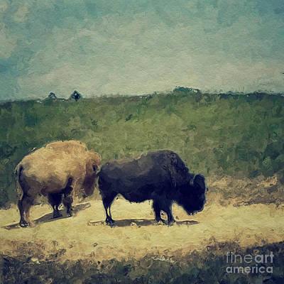 White And Black Buffalo Art Print