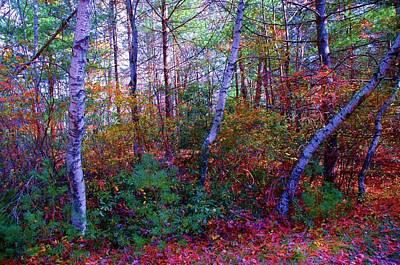 White Birch - Pocono Mountains Art Print by Susan Carella