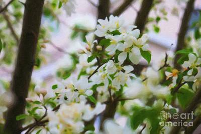 Photograph - White Crabapple  by Donna Munro