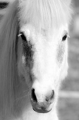 Palomino Foal Photograph - White Horse  by Tommytechno Sweden