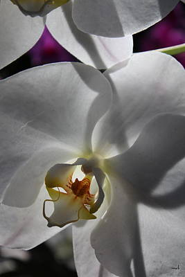 White Orchid Four Art Print by Mark Steven Burhart