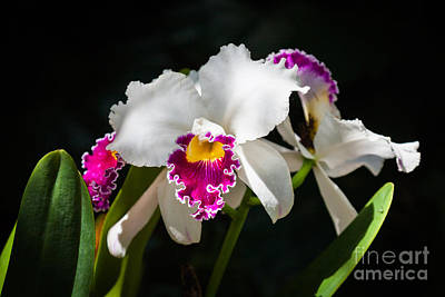 Florida Flowers Photograph - White Orchid by Juan Silva