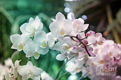 White Orchid  Original