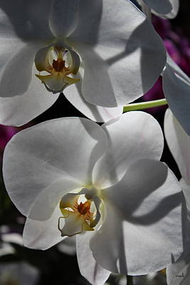 White Orchid Two Art Print by Mark Steven Burhart