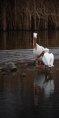 Photograph - White Pelicans by Ernie Echols