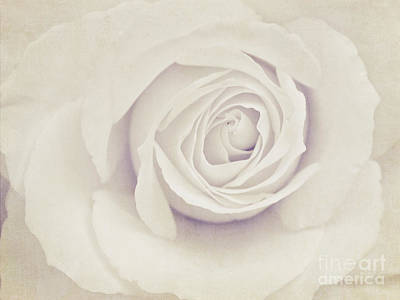 Photograph - White Rose by Diana Kraleva