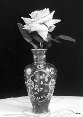 Photograph - White Rose by William Haggart