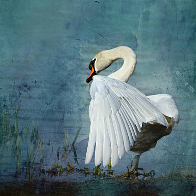 Swan Mixed Media - White Swan by Heike Hultsch