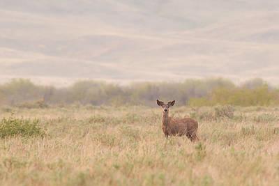 Pasta Al Dente - White-tailed deer by Brandon Smith