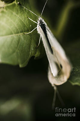 Small Forest. Beauty Photograph - White Winged Moth Insect On A Green Tree Leaf by Jorgo Photography - Wall Art Gallery