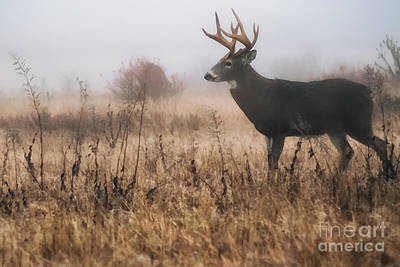 Whitetail Buck In Mist Art Print by Thomas R Fletcher