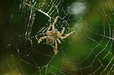 Photograph - Wicked Web by Fraida Gutovich