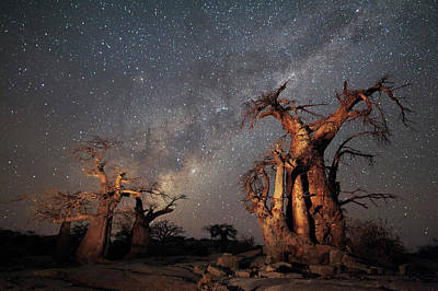 Photograph - Wide Angle View Of Boabab Trees Below by Hougaard Malan