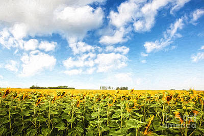 Photograph - Wide Open Fields Of Sunflowers/ Digital Painting by Sandra Cunningham