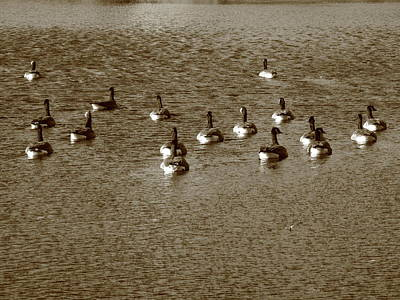 Canadian Marsh Photograph - Wild Birds And Pond by Frank Romeo