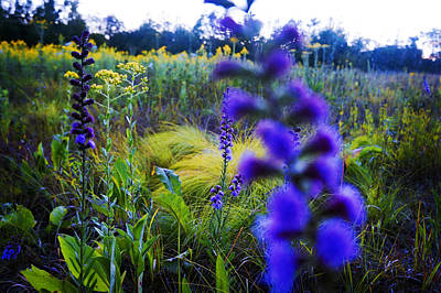 Colours Painting - Wild Flowers by Celestial Images