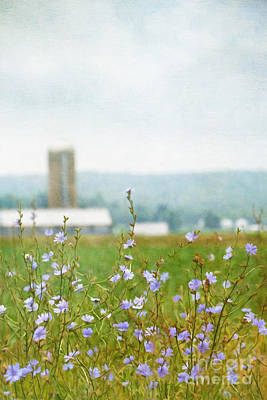 Photograph - Wild Flowers Growing In Farm Fields/ Digital Painting by Sandra Cunningham