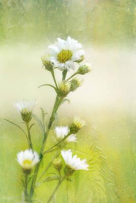 Wild Flowers Art Print by Joan Bertucci