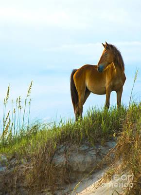 Animals Photos - Wild Horse by Diane Diederich