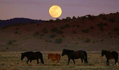 Photograph - Wild Horse Moon  by Jeanne  Bencich-Nations