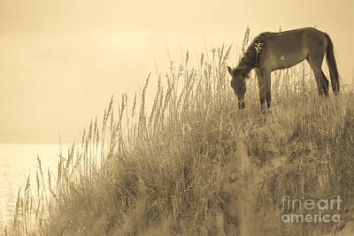 Animals Photos - Wild Horse on the Outer Banks by Diane Diederich