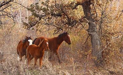 Wild Horses Art Print by Lynn Hopwood