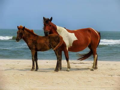 Maryland Horses Photograph - Wild Horses Of Assateague Island by Mountain Dreams