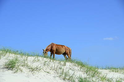 Photograph - Wild Horses Of Corolla by Allen Beatty
